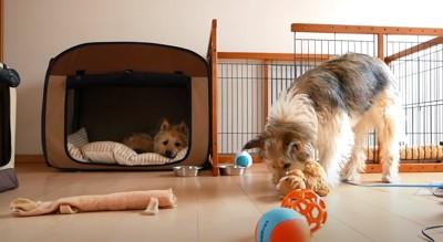 おもちゃを運ぶ犬
