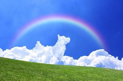 虹がかかった青空に浮かぶ犬の形をした雲