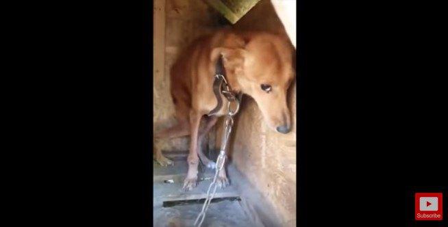 犬小屋の奥で縮こまる犬