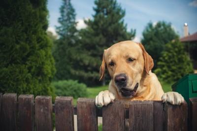 柵に手をかける犬