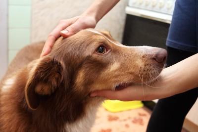 顎を支えられて頭を撫でられている犬