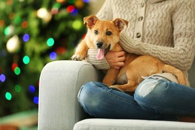 人の膝に座る犬