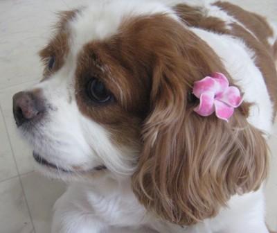 ハワイの女の子みたいな犬