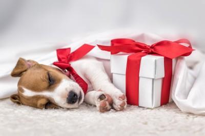 子犬とプレゼント