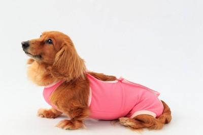 犬の術後服