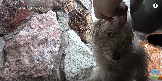 犬の頭に触る