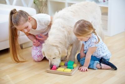 女の子たちと遊ぶ犬