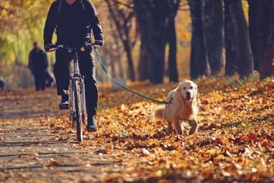 自転車で引っ張られる犬