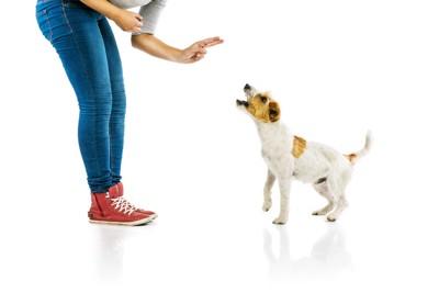 犬にハンドシグナルを出す女性