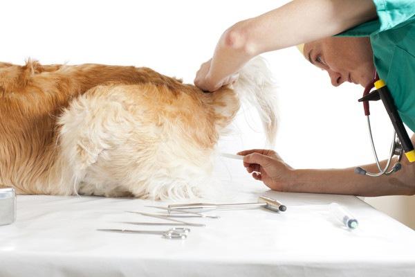 犬のお尻の治療