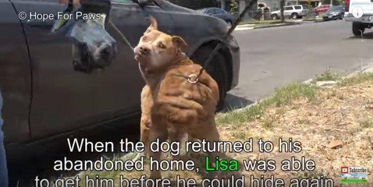 捕獲された犬
