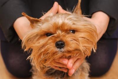 触られて不満そうな犬