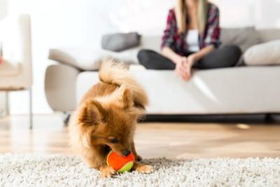 ボールで遊んでいる犬
