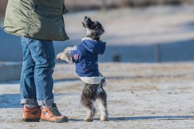 飼い主の足元で立ち上がる犬