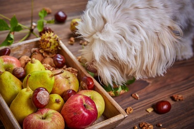 犬の手と果物の写真