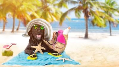 浜辺にいるサングラスをした犬