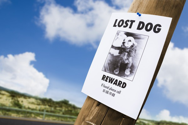 探している犬の貼り紙