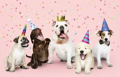 犬たちのパーティ