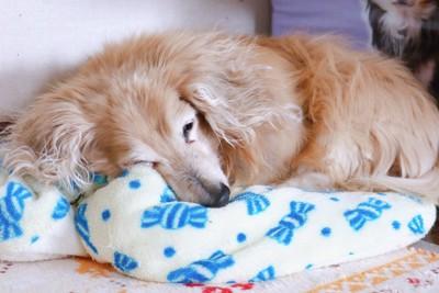 眠る高齢犬