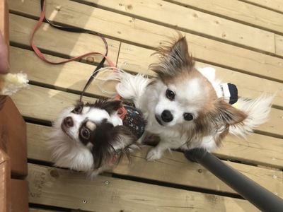 犬2匹の正面姿