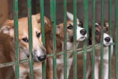緑の檻に入る3匹の犬