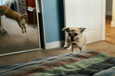 ベッドに飛び込もうとしている犬