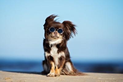 サングラスをかけ座っている犬