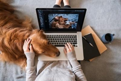 女性の腕とパソコンの間に顔を入れる犬
