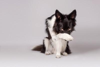 鼻を隠す犬
