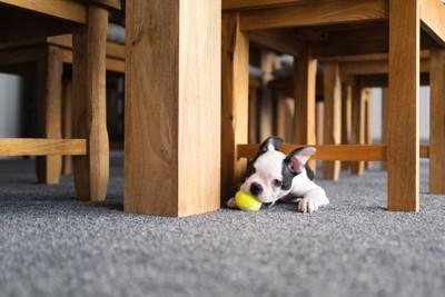 テーブルの下で黄色いボールで遊ぶ子犬