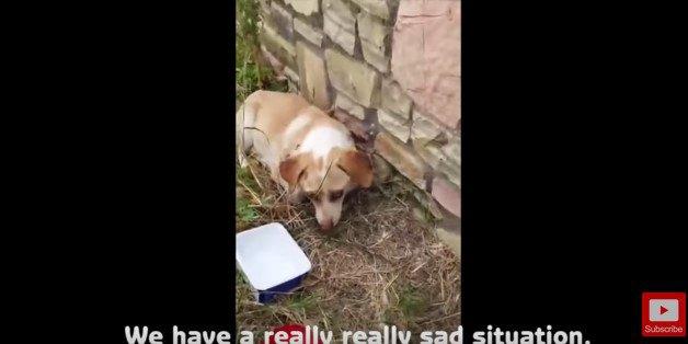 新たに発見された全盲の犬