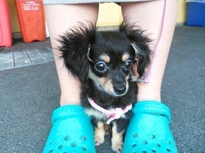 足元で怯えている子犬