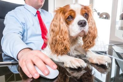 オフィスの椅子に座る女性と犬