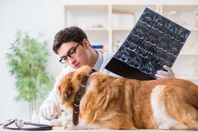 獣医の診察を受ける犬