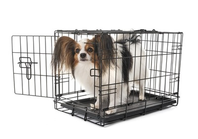 ケージの中の犬