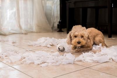 散らかったティッシュと犬