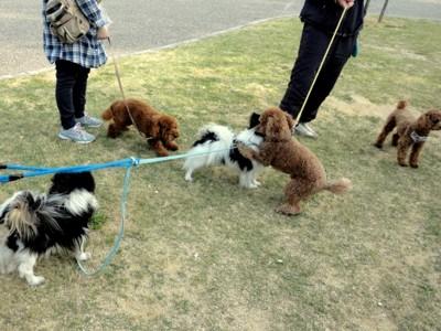 公園での集まり わんちゃん集合 遊んでいる