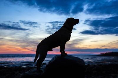 壮大な犬のシルエット