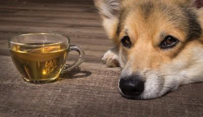 カップに入ったお茶のそばでくつろぐ犬