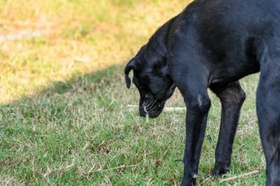 嘔吐する犬
