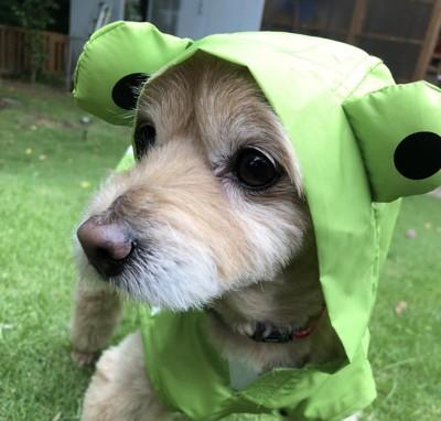 レインコートを着た犬