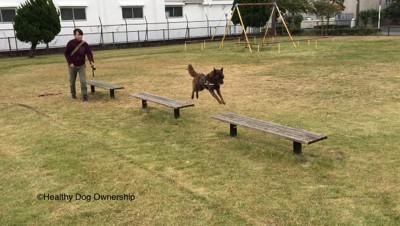 ベンチに飛び移る犬