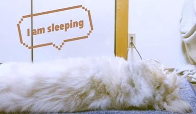 寝るワンちゃん