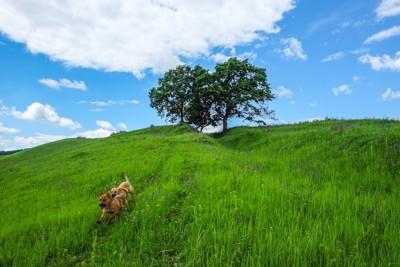 大草原を走る2頭の犬と青空