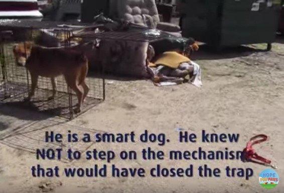 ケージに入って様子をうかがう犬