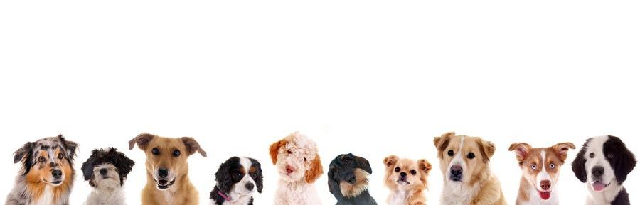 10頭の犬