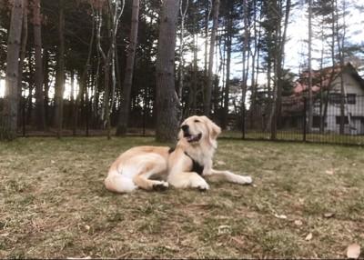 愛犬も大満足の様子