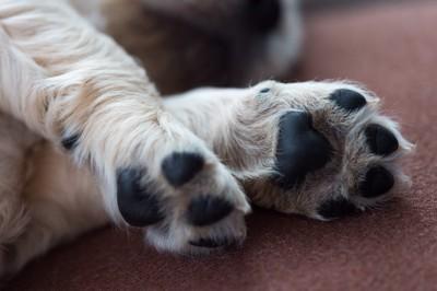 子犬の足裏
