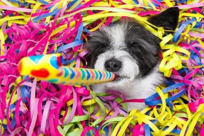 お祝いをする犬