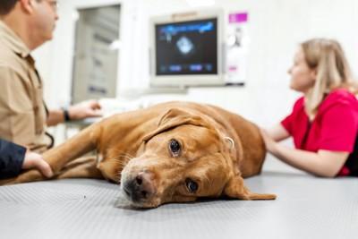 診察台に横たわる犬と獣医師の説明を聞く飼い主